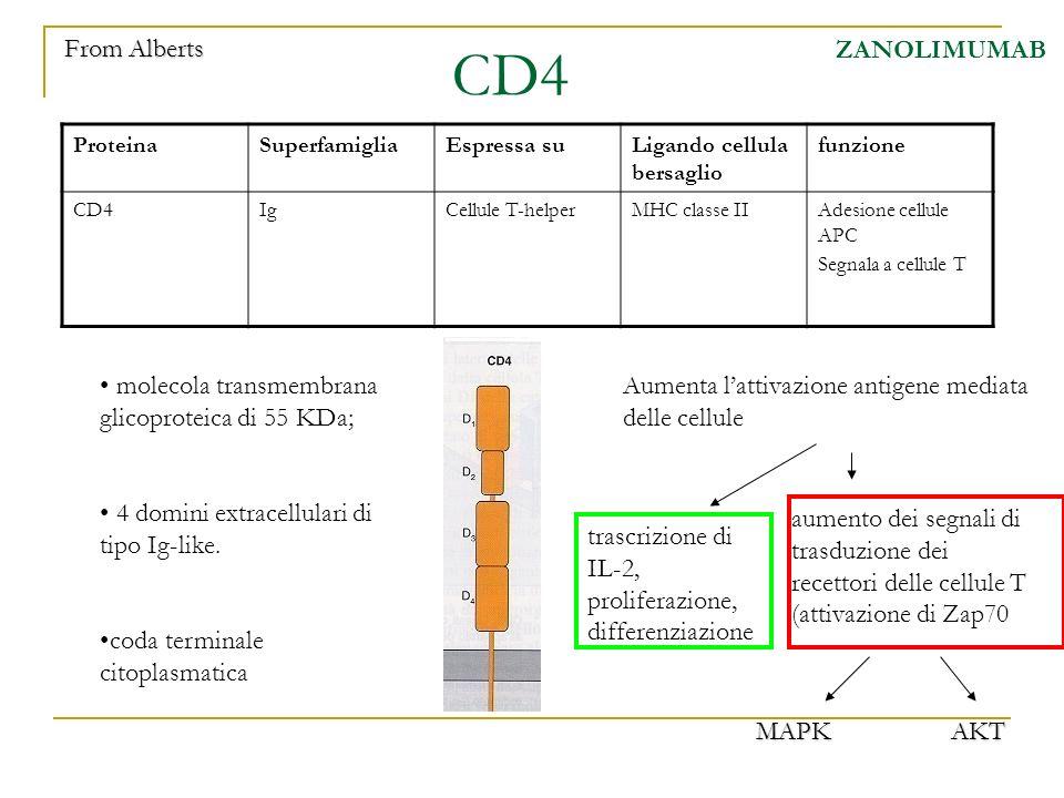 CD4 From Alberts ZANOLIMUMAB