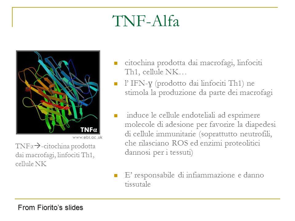 TNF-Alfa citochina prodotta dai macrofagi, linfociti Th1, cellule NK…