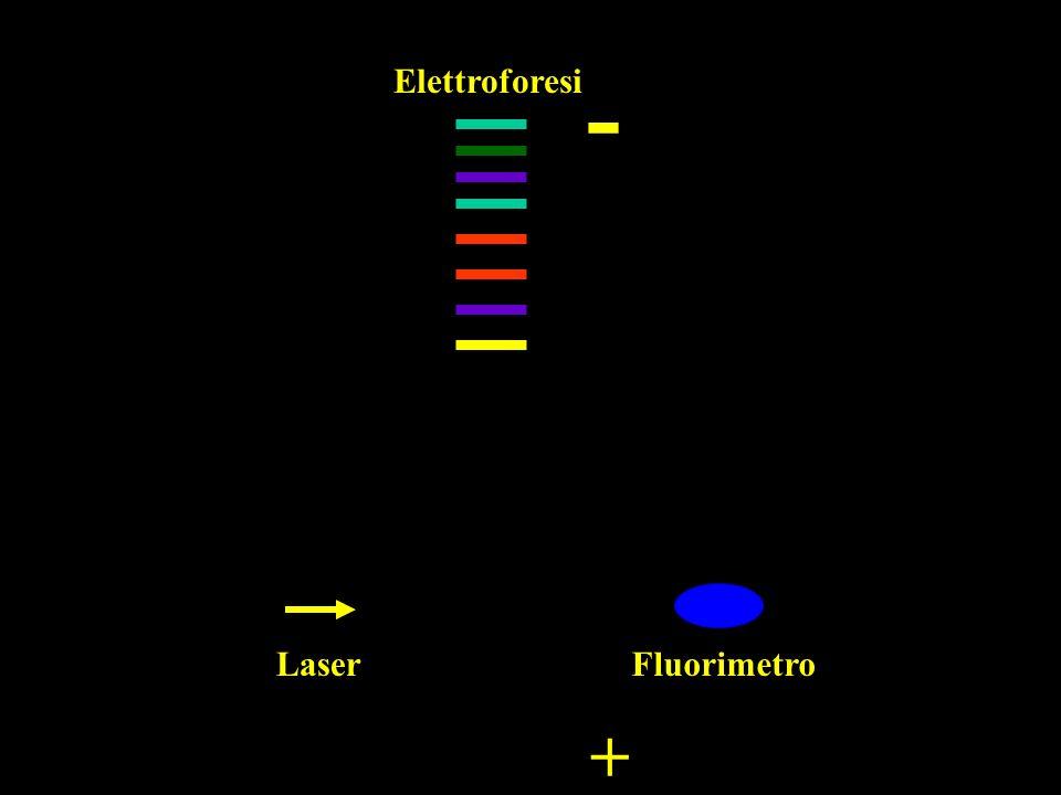 - Elettroforesi Laser Fluorimetro +