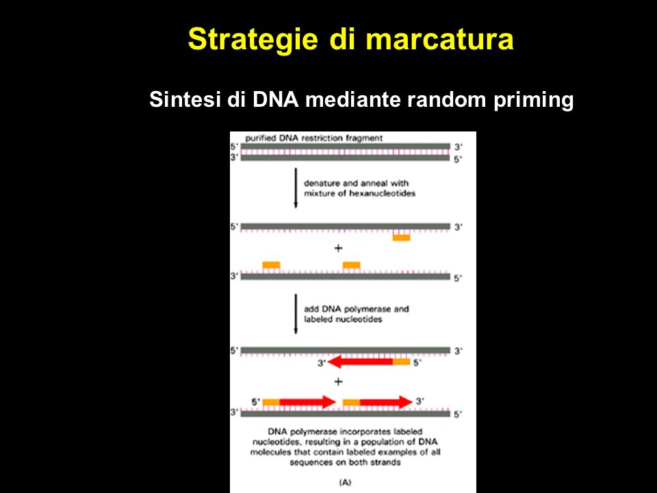 Strategie di marcatura