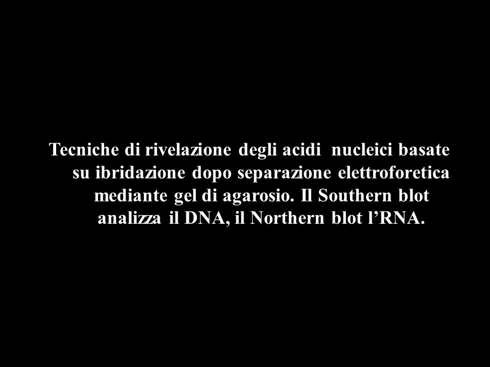 Tecniche di rivelazione degli acidi nucleici basate su ibridazione dopo separazione elettroforetica mediante gel di agarosio.