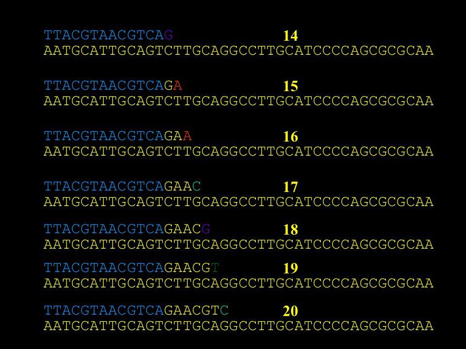 TTACGTAACGTCAG 14. AATGCATTGCAGTCTTGCAGGCCTTGCATCCCCAGCGCGCAA. TTACGTAACGTCAGA. 15. AATGCATTGCAGTCTTGCAGGCCTTGCATCCCCAGCGCGCAA.