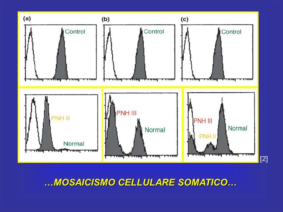 …MOSAICISMO CELLULARE SOMATICO…