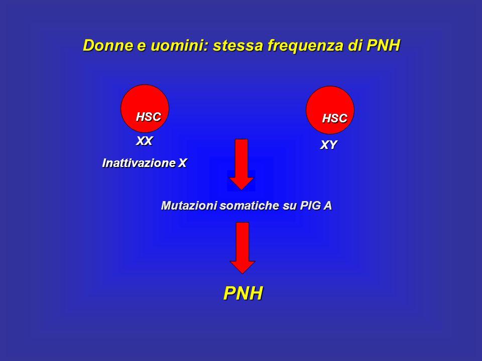 Donne e uomini: stessa frequenza di PNH Mutazioni somatiche su PIG A