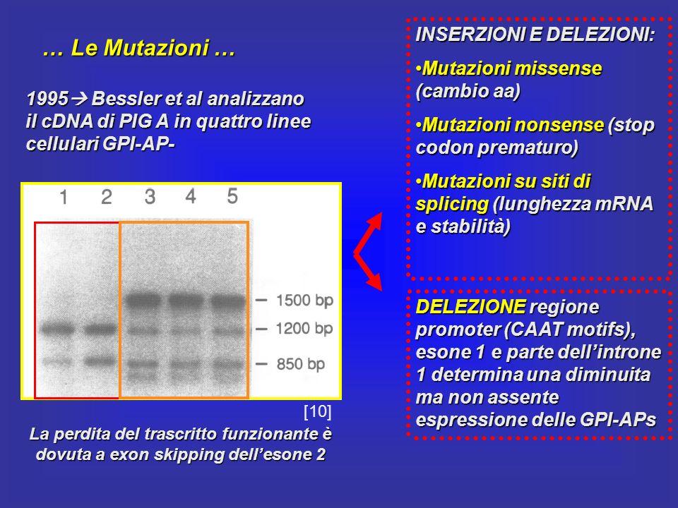 … Le Mutazioni … INSERZIONI E DELEZIONI:
