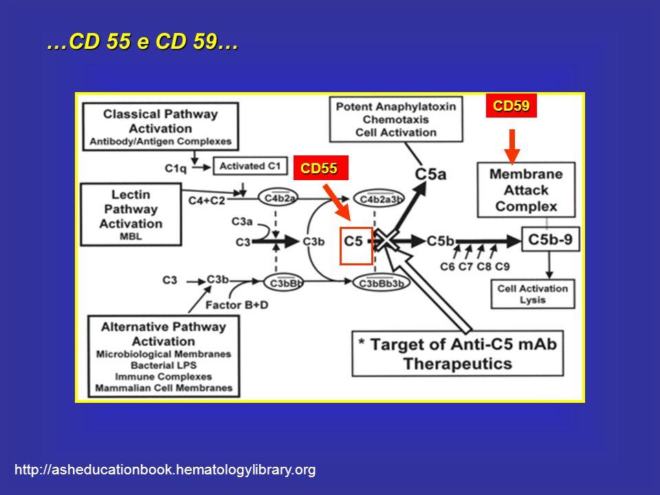 …CD 55 e CD 59… CD59 CD55 http://asheducationbook.hematologylibrary.org