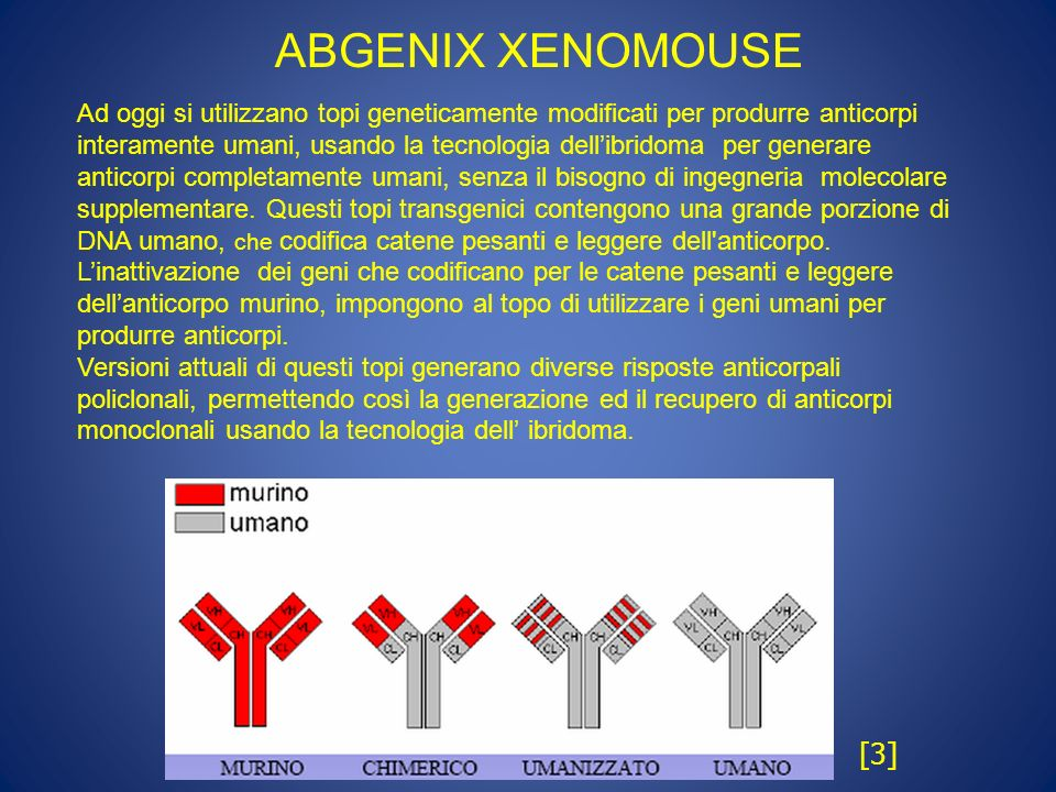 ABGENIX XENOMOUSE