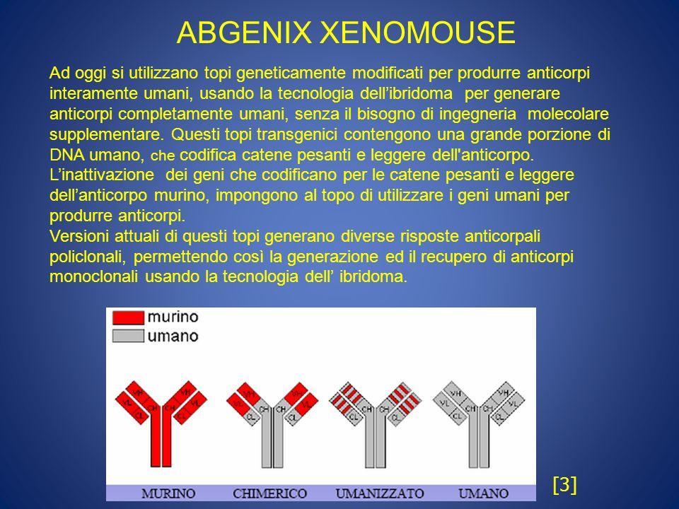 ABGENIX XENOMOUSE