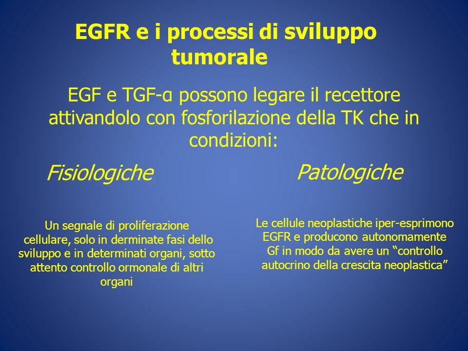 EGFR e i processi di sviluppo tumorale