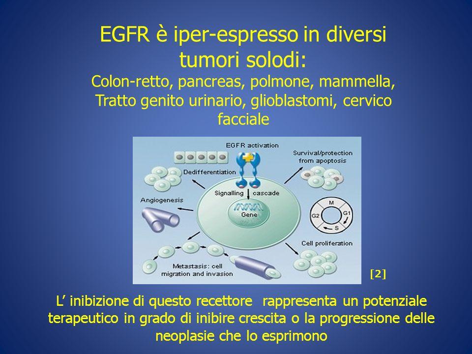 EGFR è iper-espresso in diversi tumori solodi: