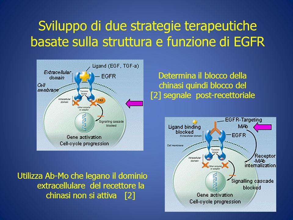 Sviluppo di due strategie terapeutiche basate sulla struttura e funzione di EGFR