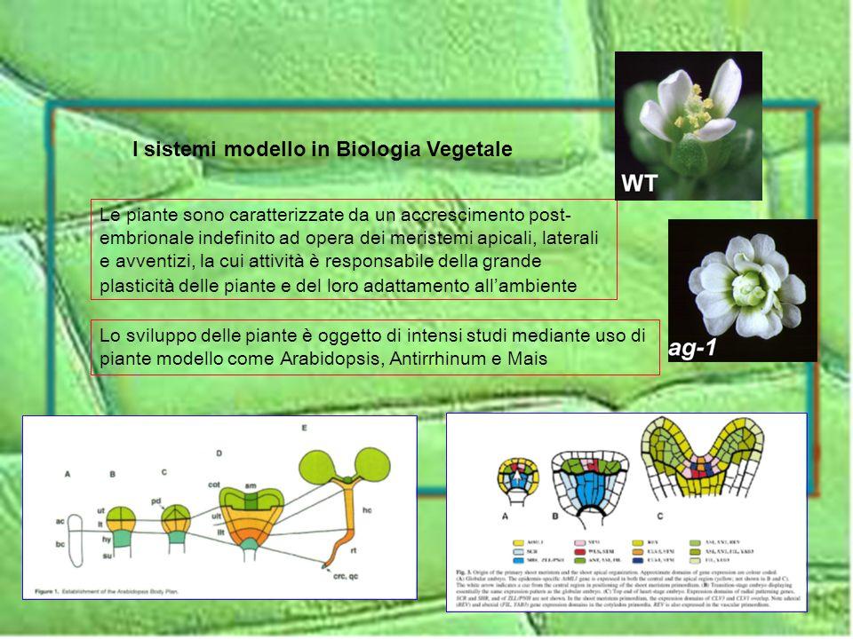 I sistemi modello in Biologia Vegetale
