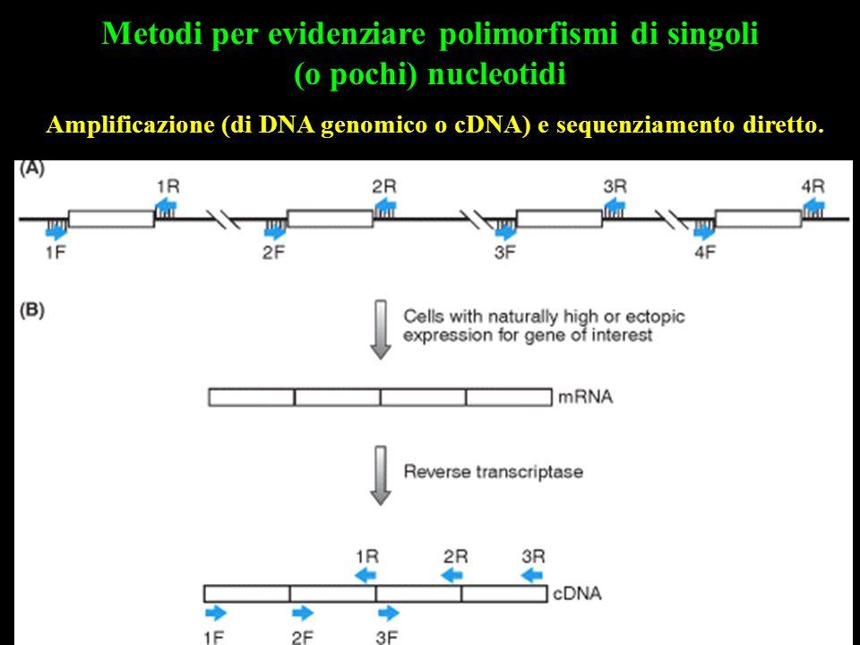 Metodi per evidenziare polimorfismi di singoli (o pochi) nucleotidi