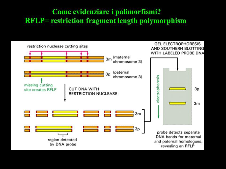 Come evidenziare i polimorfismi