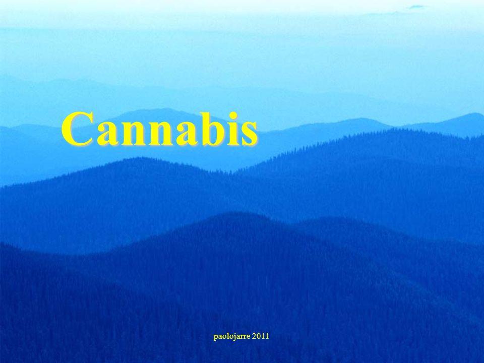 Cannabis paolojarre 2011 32