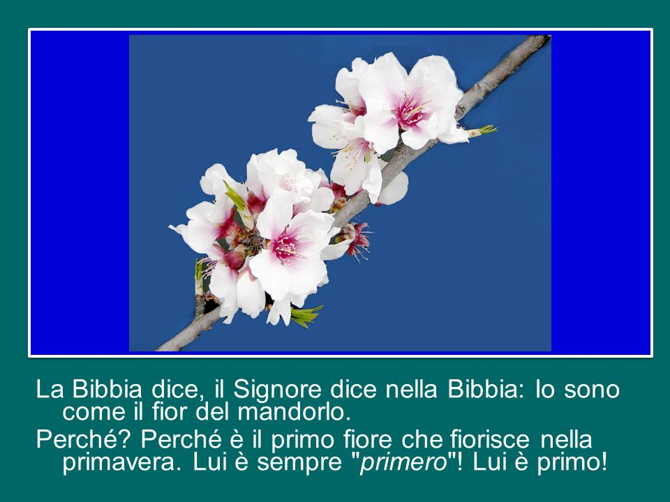 La Bibbia dice, il Signore dice nella Bibbia: Io sono come il fior del mandorlo.
