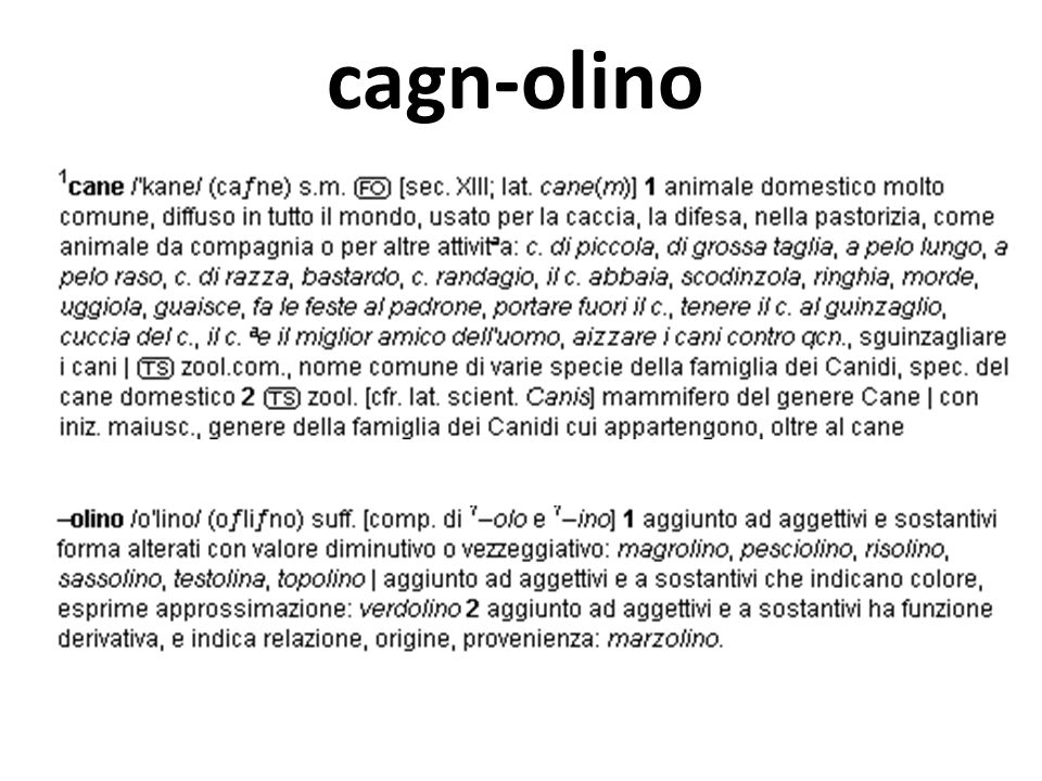 cagn-olino