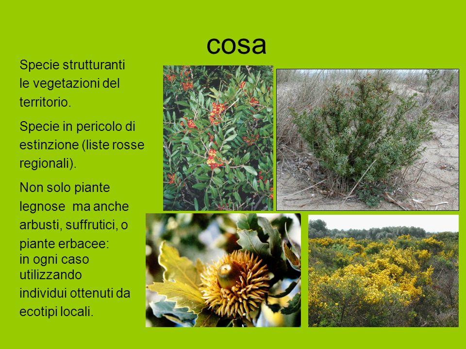 cosa Specie strutturanti le vegetazioni del territorio.