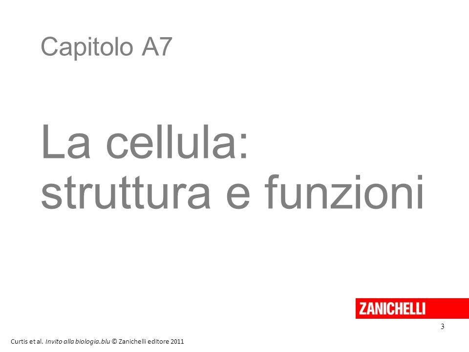 La cellula: struttura e funzioni Capitolo A7 3 20/11/11 3