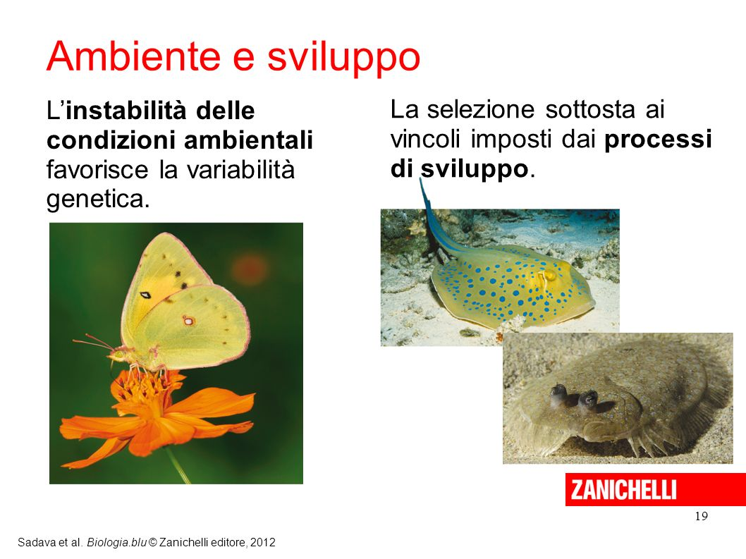 Ambiente e sviluppo L'instabilità delle condizioni ambientali favorisce la variabilità genetica.