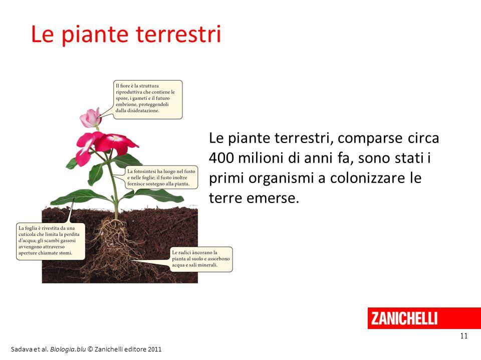 13/11/11 Le piante terrestri.