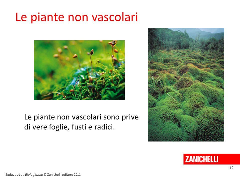 Le piante non vascolari