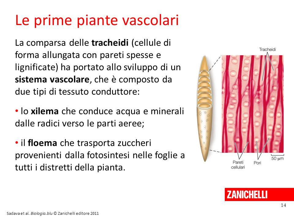 Le prime piante vascolari