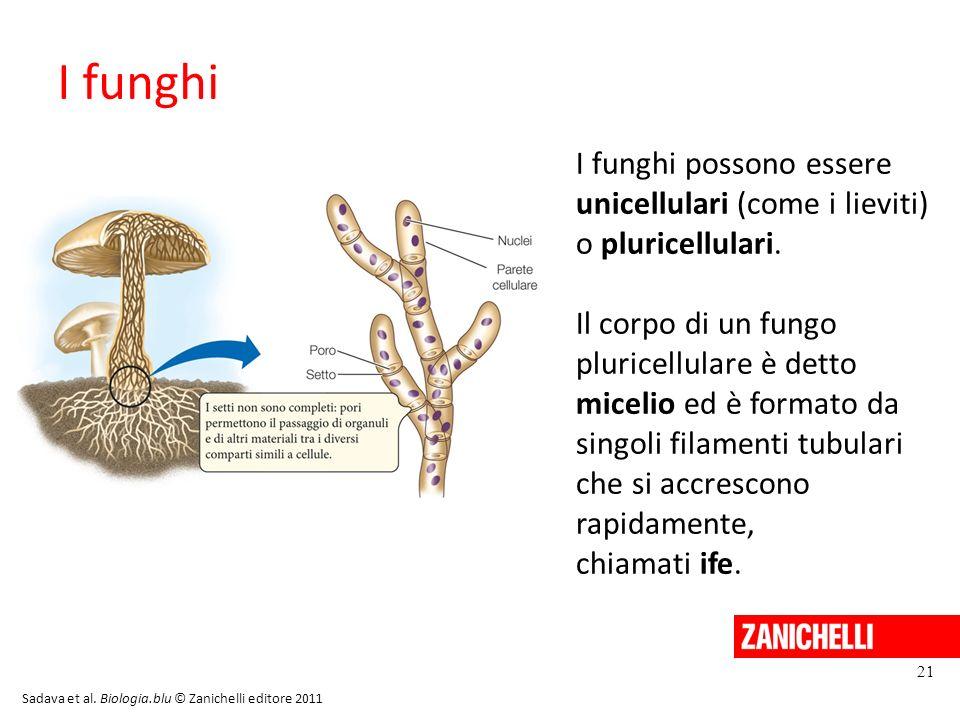 13/11/11 I funghi. I funghi possono essere unicellulari (come i lieviti) o pluricellulari.