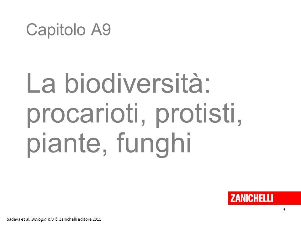 procarioti, protisti, piante, funghi