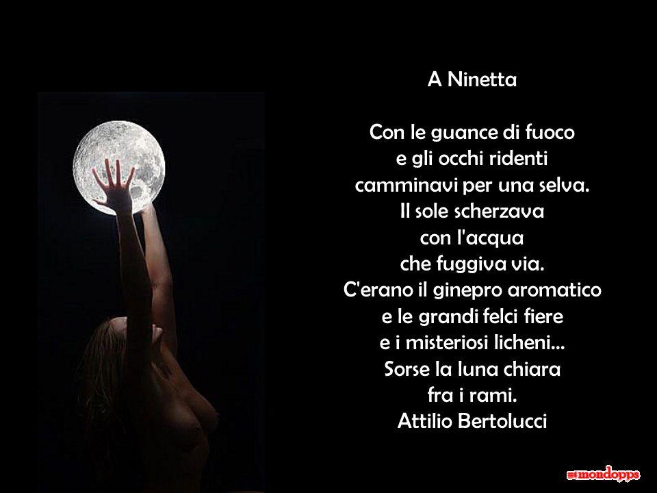 A Ninetta