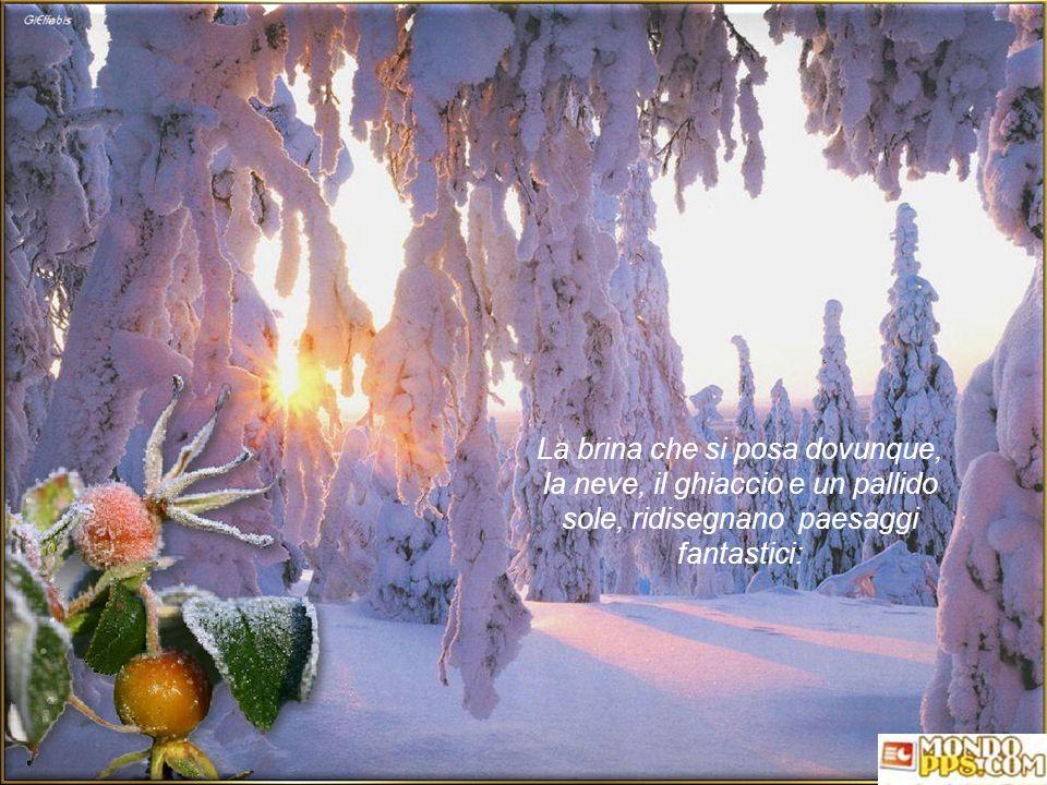 La brina che si posa dovunque, la neve, il ghiaccio e un pallido sole, ridisegnano paesaggi fantastici:
