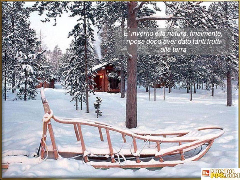 E' inverno e la natura, finalmente, riposa dopo aver dato tanti frutti