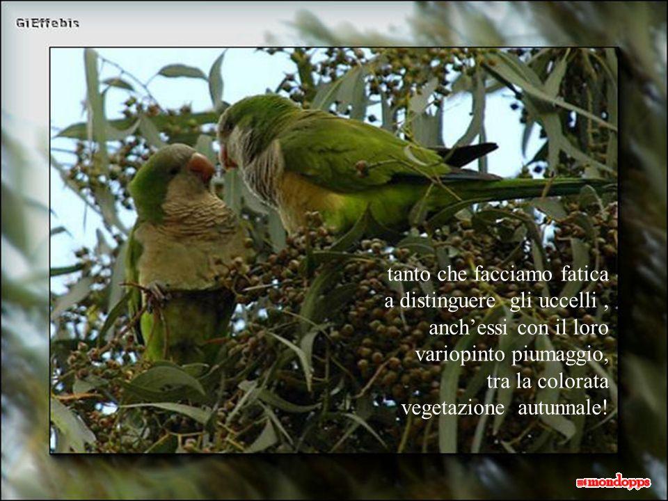 tanto che facciamo fatica a distinguere gli uccelli , anch'essi con il loro variopinto piumaggio,