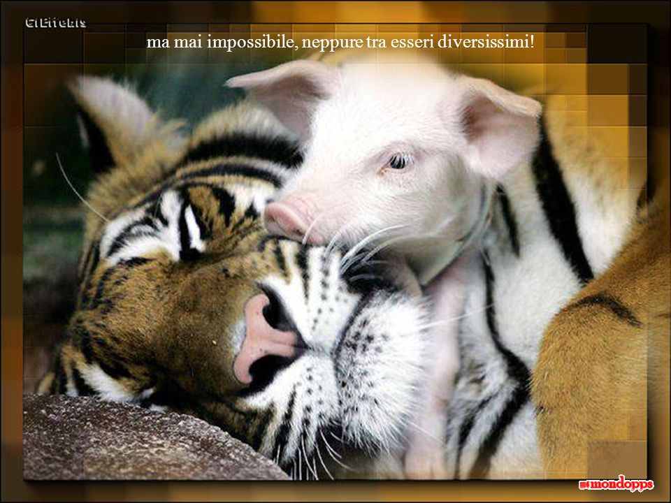 ma mai impossibile, neppure tra esseri diversissimi!