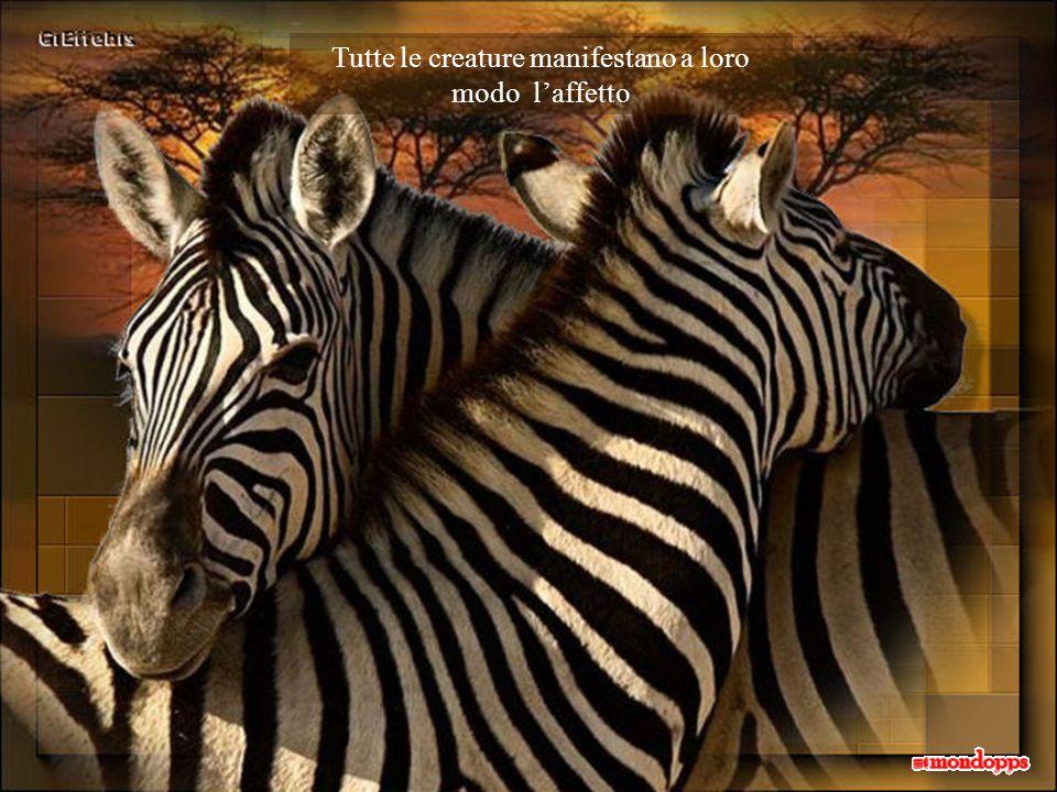 Tutte le creature manifestano a loro modo l'affetto