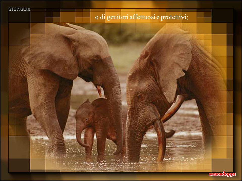 o di genitori affettuosi e protettivi;