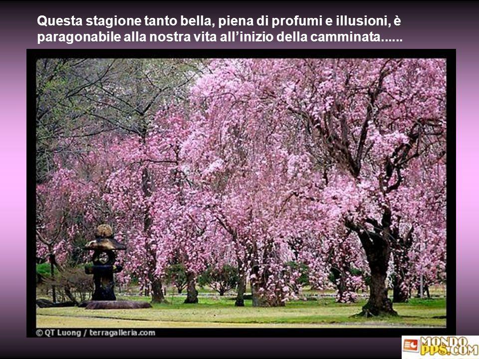 Questa stagione tanto bella, piena di profumi e illusioni, è paragonabile alla nostra vita all'inizio della camminata......