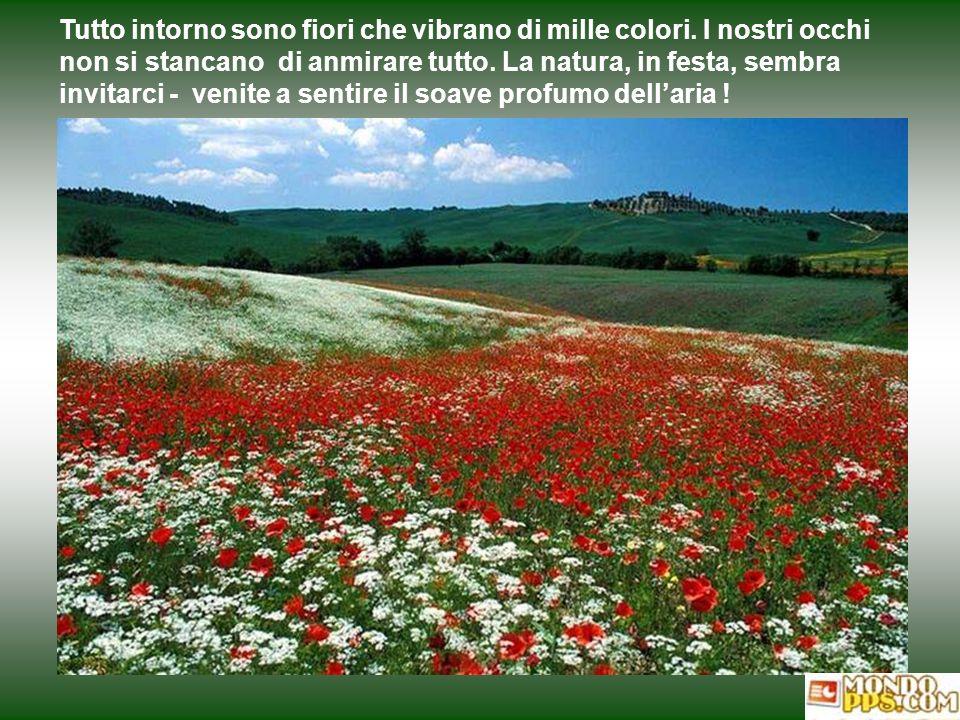 Tutto intorno sono fiori che vibrano di mille colori