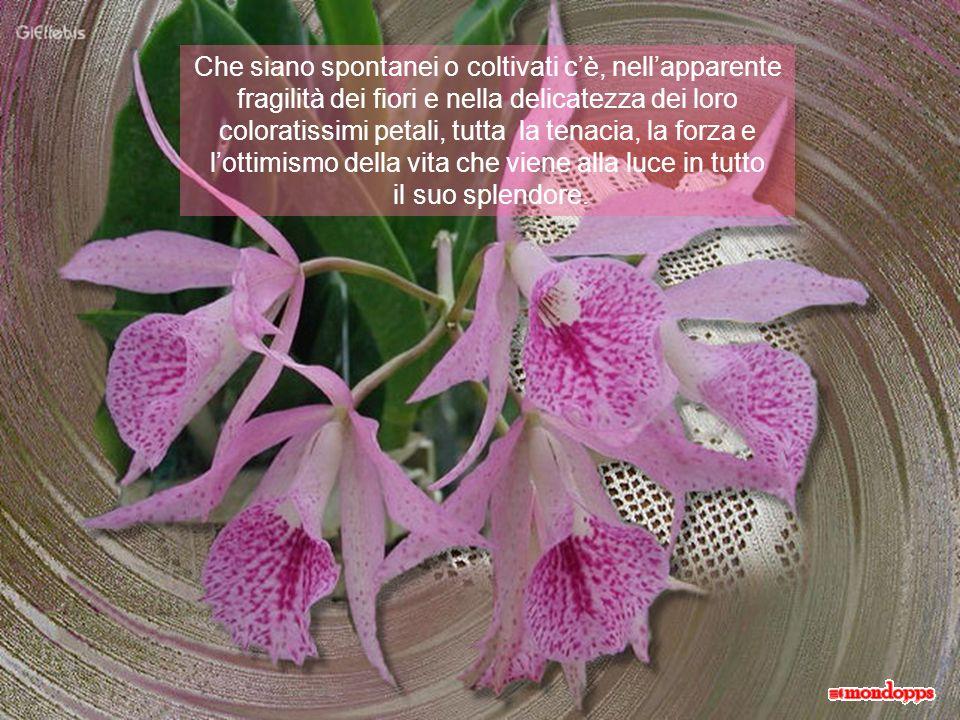 Che siano spontanei o coltivati c'è, nell'apparente fragilità dei fiori e nella delicatezza dei loro coloratissimi petali, tutta la tenacia, la forza e l'ottimismo della vita che viene alla luce in tutto