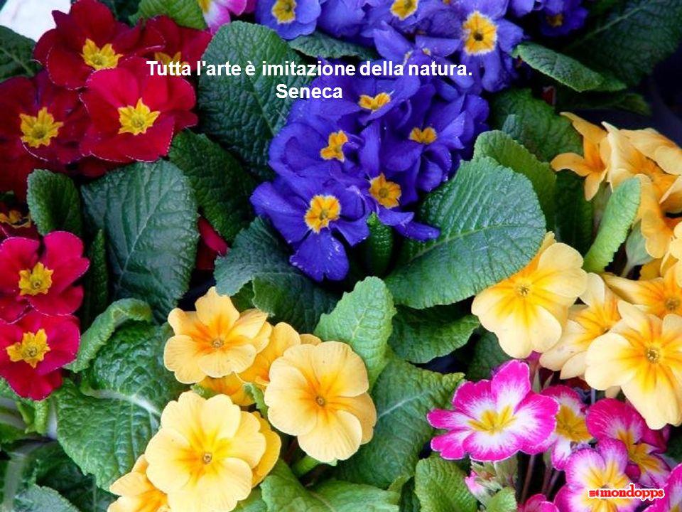 Tutta l arte è imitazione della natura. Seneca