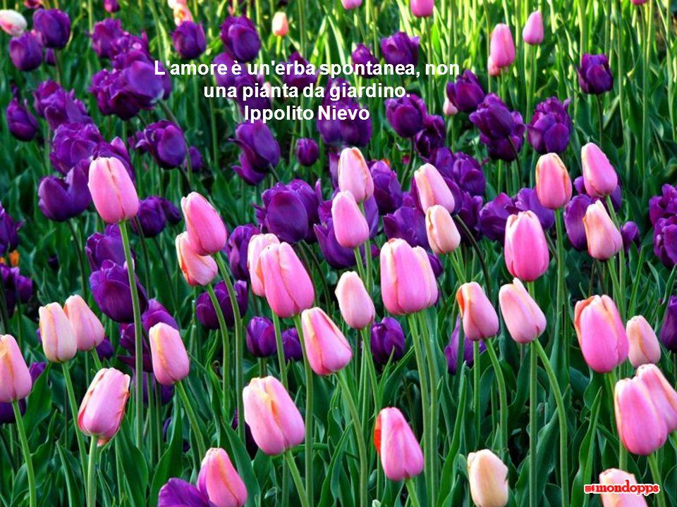 L amore è un erba spontanea, non una pianta da giardino. Ippolito Nievo