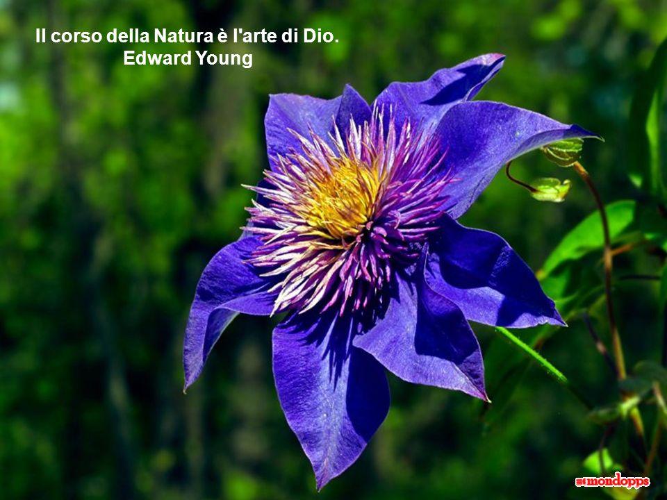 Il corso della Natura è l arte di Dio. Edward Young