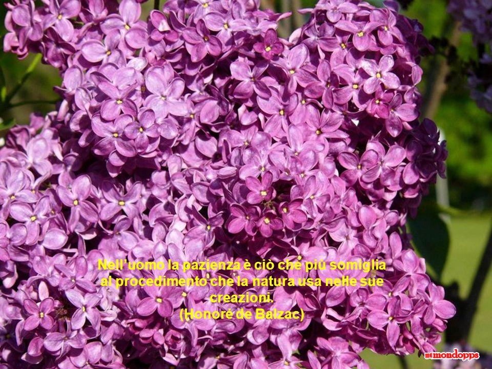 Nell'uomo la pazienza è ciò che più somiglia al procedimento che la natura usa nelle sue creazioni. (Honoré de Balzac)