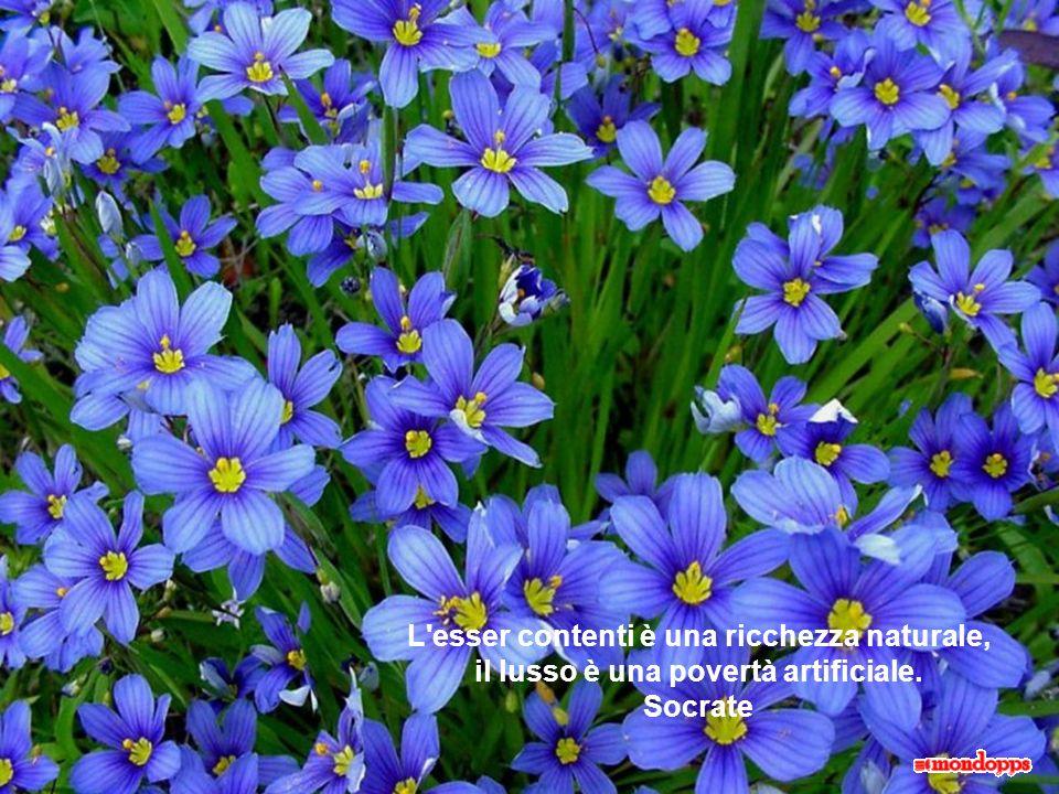 L esser contenti è una ricchezza naturale, il lusso è una povertà artificiale. Socrate