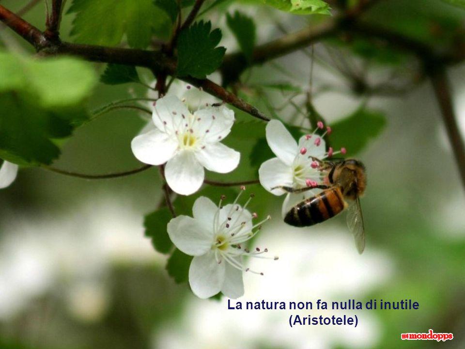 La natura non fa nulla di inutile (Aristotele)
