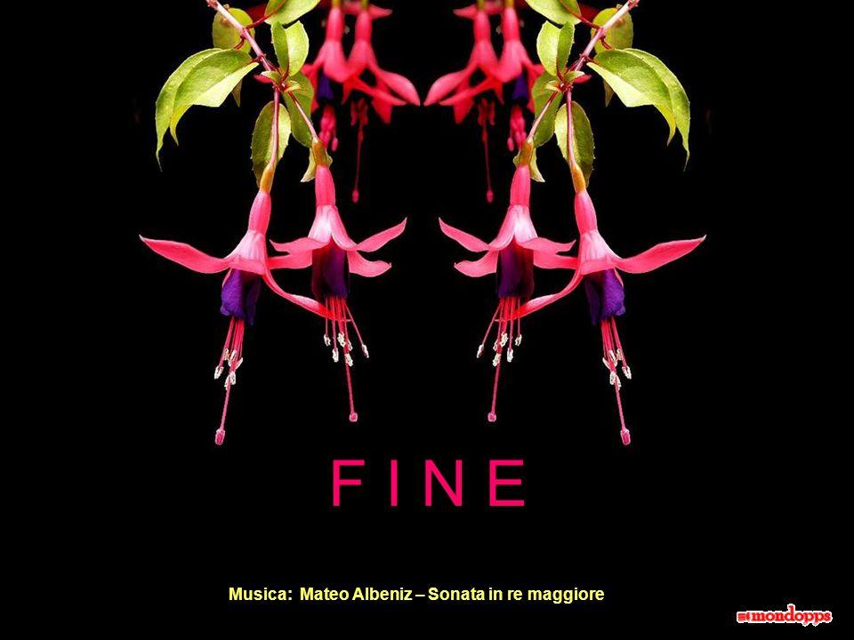 F I N E Musica: Mateo Albeniz – Sonata in re maggiore 19