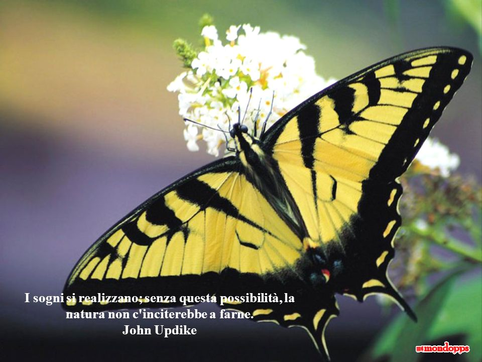 I sogni si realizzano; senza questa possibilità, la natura non c inciterebbe a farne. John Updike