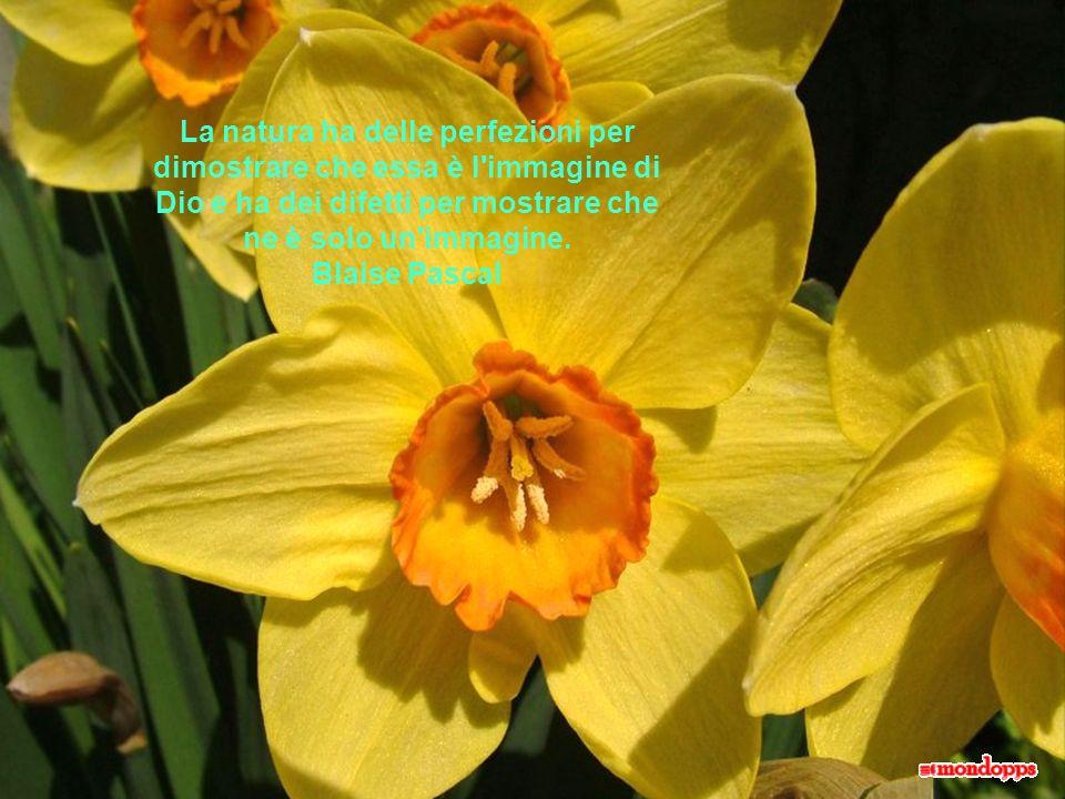 La natura ha delle perfezioni per dimostrare che essa è l immagine di Dio e ha dei difetti per mostrare che ne è solo un immagine. Blaise Pascal