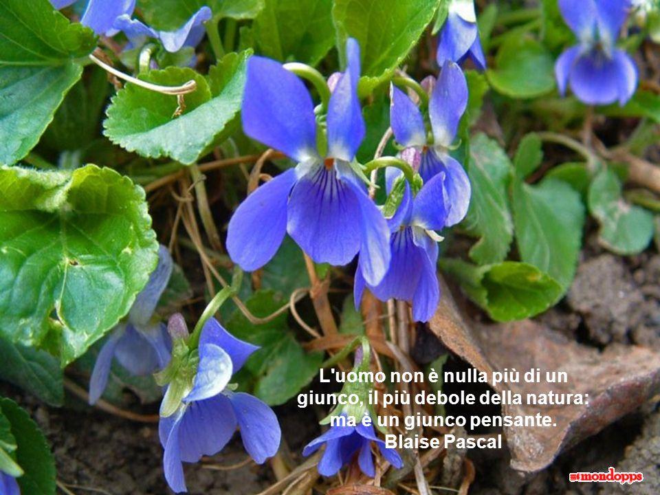 L uomo non è nulla più di un giunco, il più debole della natura: ma è un giunco pensante. Blaise Pascal