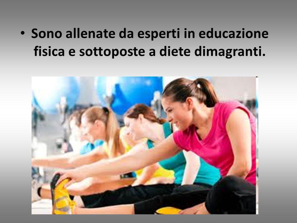 Sono allenate da esperti in educazione fisica e sottoposte a diete dimagranti.